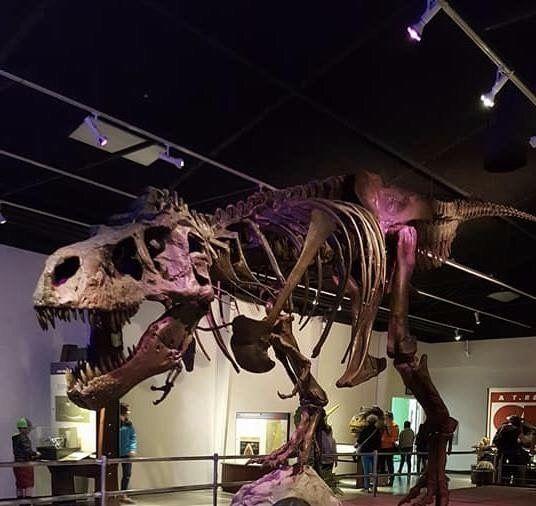 432 Best Prehistoric Dinosaurs Images On Pinterest