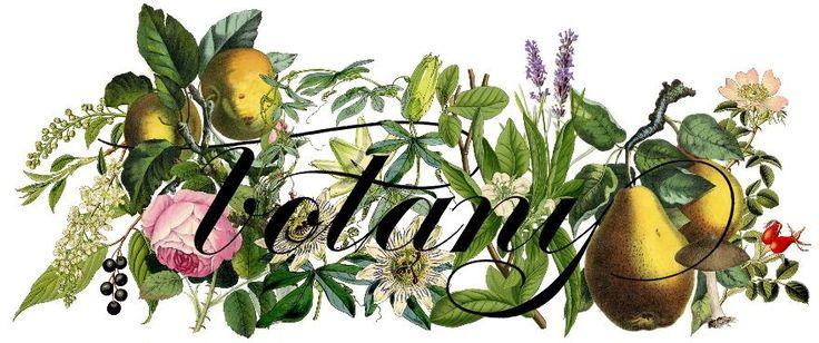botany floral studio, flowers toronto, wedding flowers toronto, toronto florist, flower delivery toronto, little italy florist, toronto downtown florist