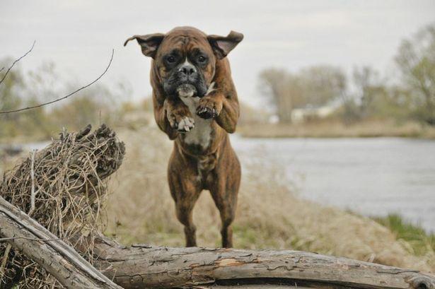 Почему владельцы собак должны взять под контроль и прекратить пугать наших детей - Эмма Гилл - Manchester Evening News