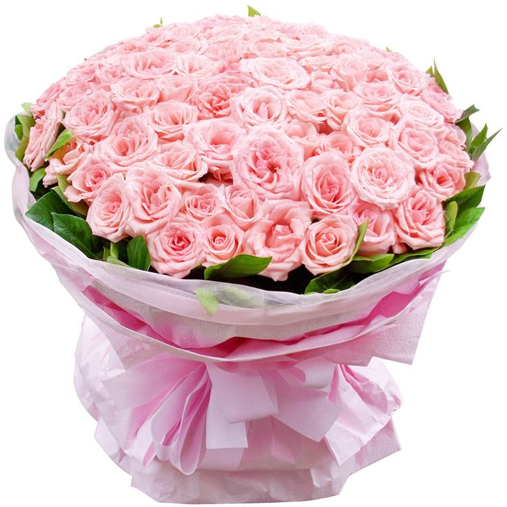 344 best Czerwone roze images on Pinterest   Beautiful flowers ...