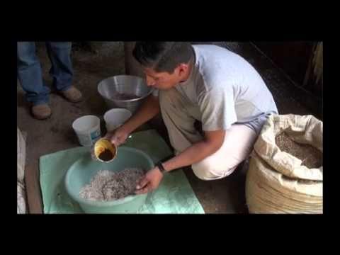 Concentrado casero para gallinas - YouTube
