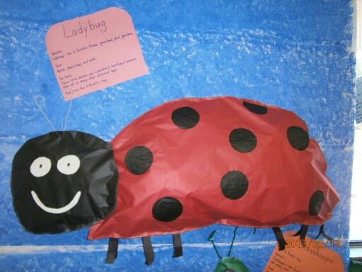 Ladybug Classroom Decoration Ideas : Best classroom decoration images frogs