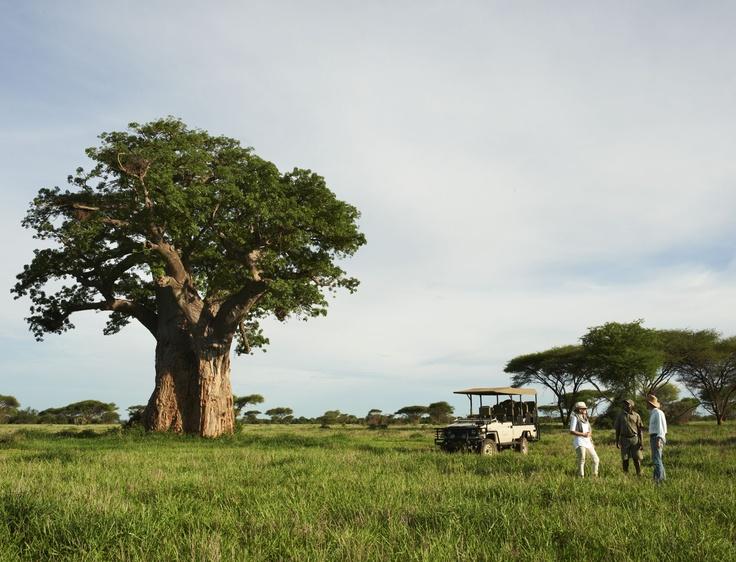 Singita Pamushana Lodge - Malilangwe, Zimbabwe