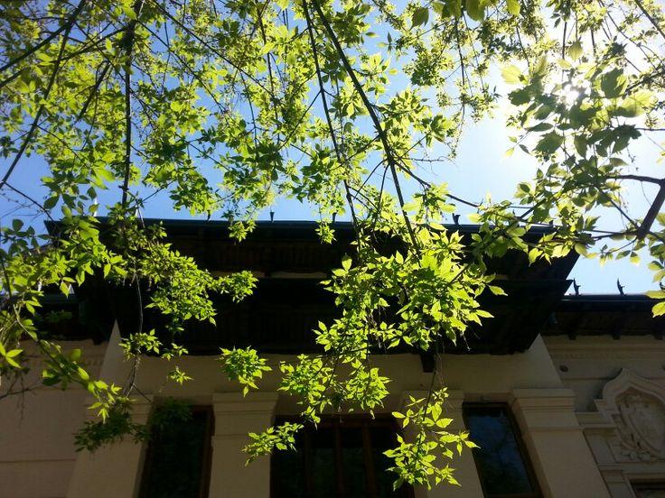 Mincu House/OAR Garden