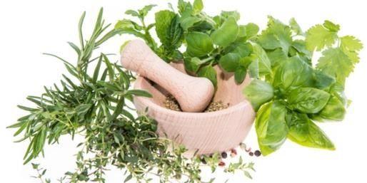 Pola Hidup Sehat Dengan Memanfaatkan Tanaman Herbal