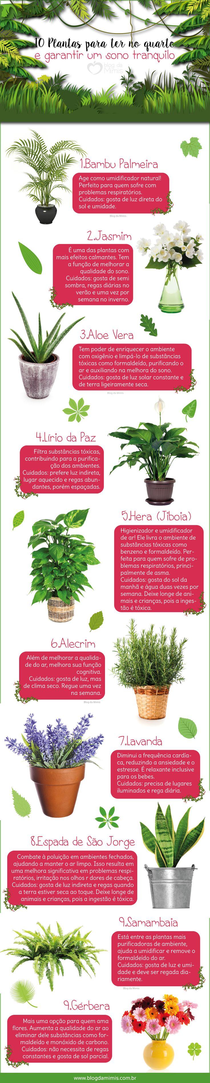 10 Plantas para ter no quarto e garantir um sono tranquilo - Blog da Mimis #plantas #quarto #decoração #arpuro #limpeza #sono #dormir #tranquilidade #sleep #quiet #soothe #plants #bedroom