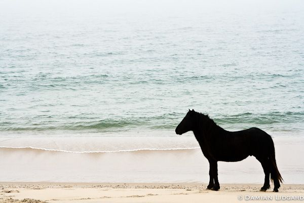 You are here: Home / Galleries / Photography of Sable Island