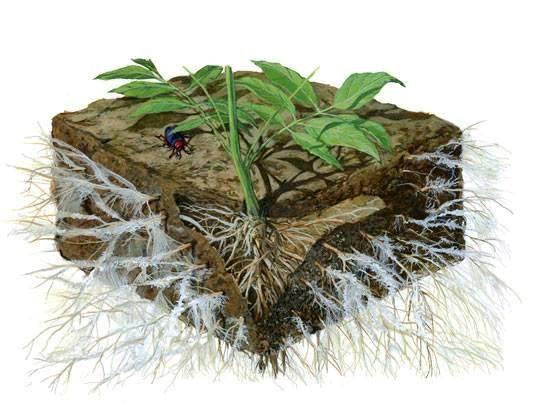 How to Grow Your Soil with Mycorrhizae and Beneficial Bacteria http://www.rightrelevance.com/search/articles/hero?article=e9ed71e825677fcf765288f1e1a8b979b03babd7&query=permaculture&taccount=permaculturre …