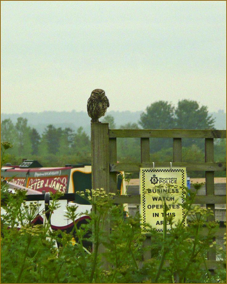 Owl security :) www.calcuttboats.com