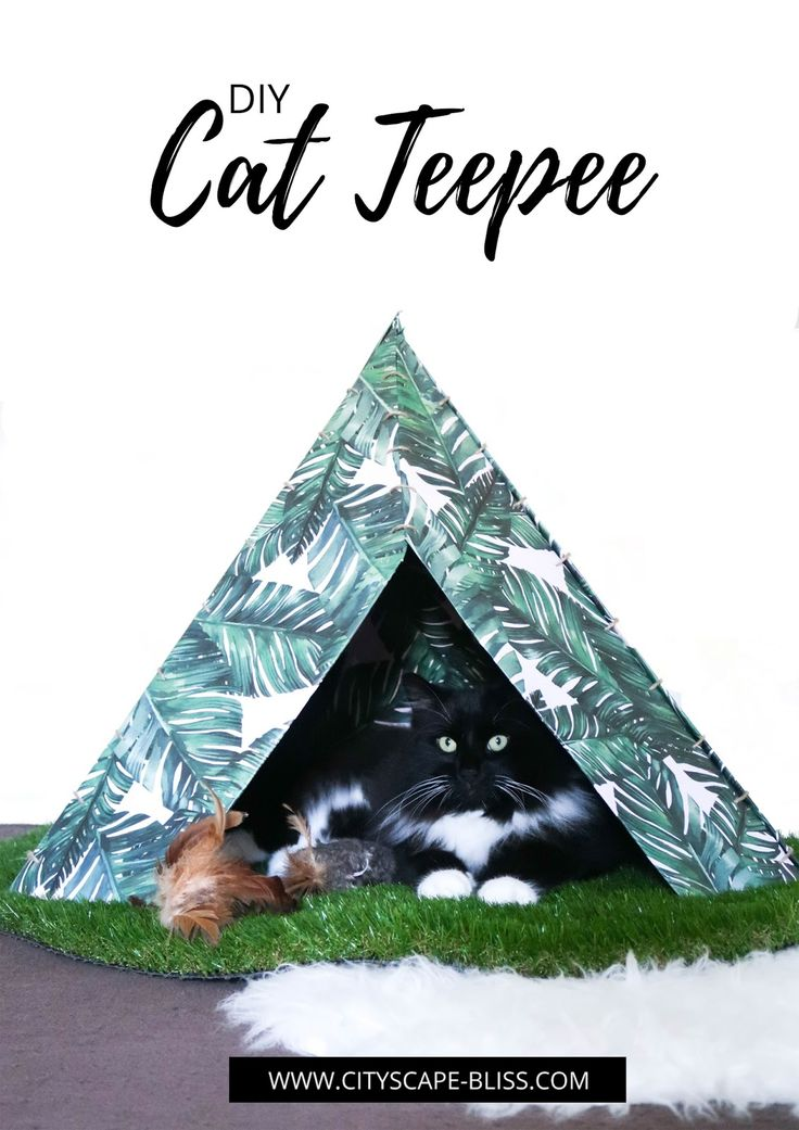 The 17 best images about cb cats on pinterest for Cat tent