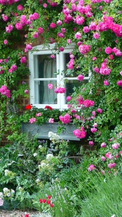 pink and red geraniums adorn a cottage window