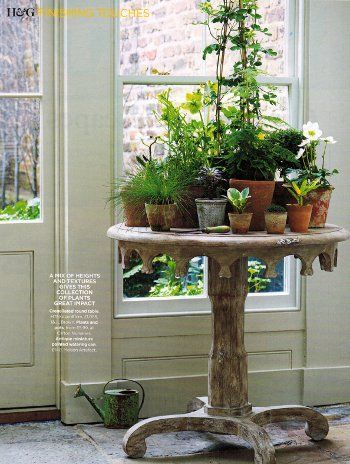 Like this with the round table with various sun-loving plants, all placed near sunny window.