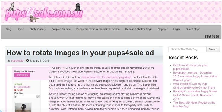 "As part of our never ending site upgrade, several months ago (in November 2015) we quietly introduced the image rotation feature for all pups4sale members.  As pictured in this post and demonstrated in the accompanying video, each click of the little pink ""Rotate Image"" tab will turn the relevant image ninety degrees clockwise. Click the tab again and the image turns another ninety degrees clockwise – and so on - http://blog.pups4sale.com.au/how-to-rotate-images-in-your-pups4sale-ad/"