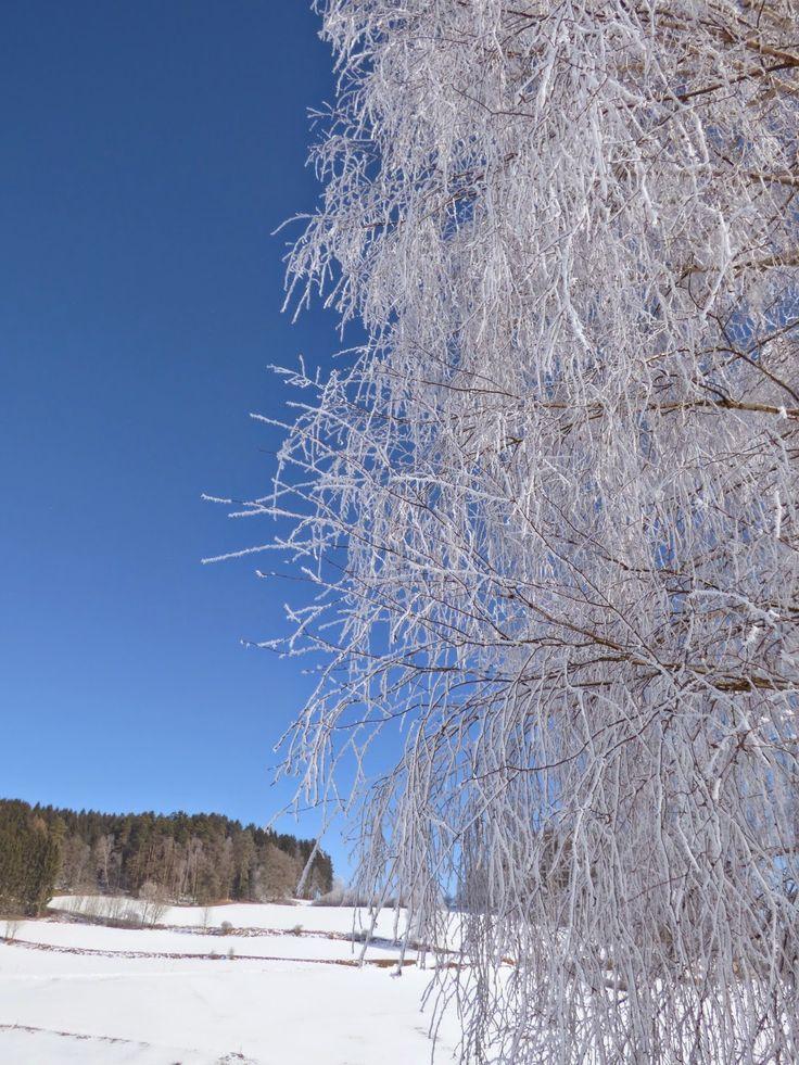 Austrian landscape on a beautiful winter's day at St.Oswald bei Freistadt, Upper Austria