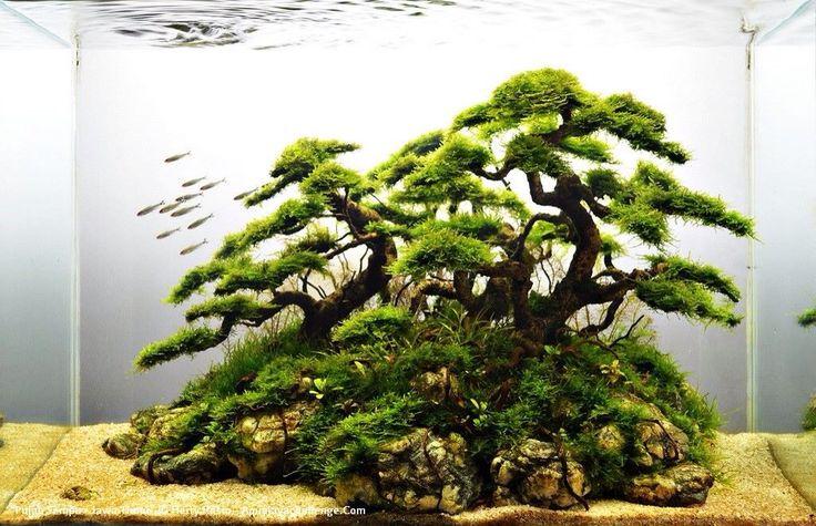 Driftwood and java moss faux bonsai.