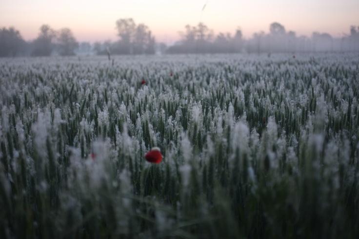 """""""Fields"""" by Simone Messaggi, via 500px."""