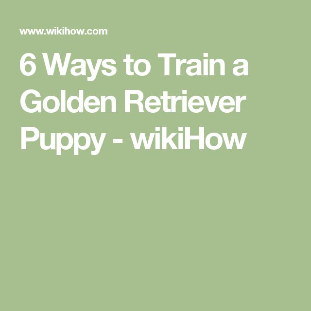 6 Ways to Train a Golden Retriever Puppy - wikiHow