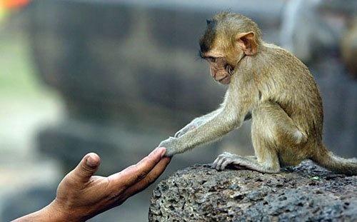 - #scimmie #somiglianze #uomo #animali #natura #comportamenti