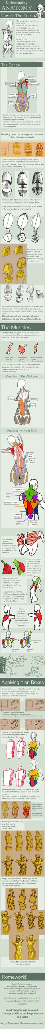 38 best Anatomy images on Pinterest | Anatomy reference, Human ...
