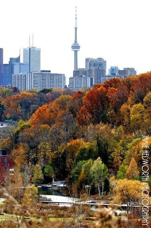 Toronto Fall Portrait