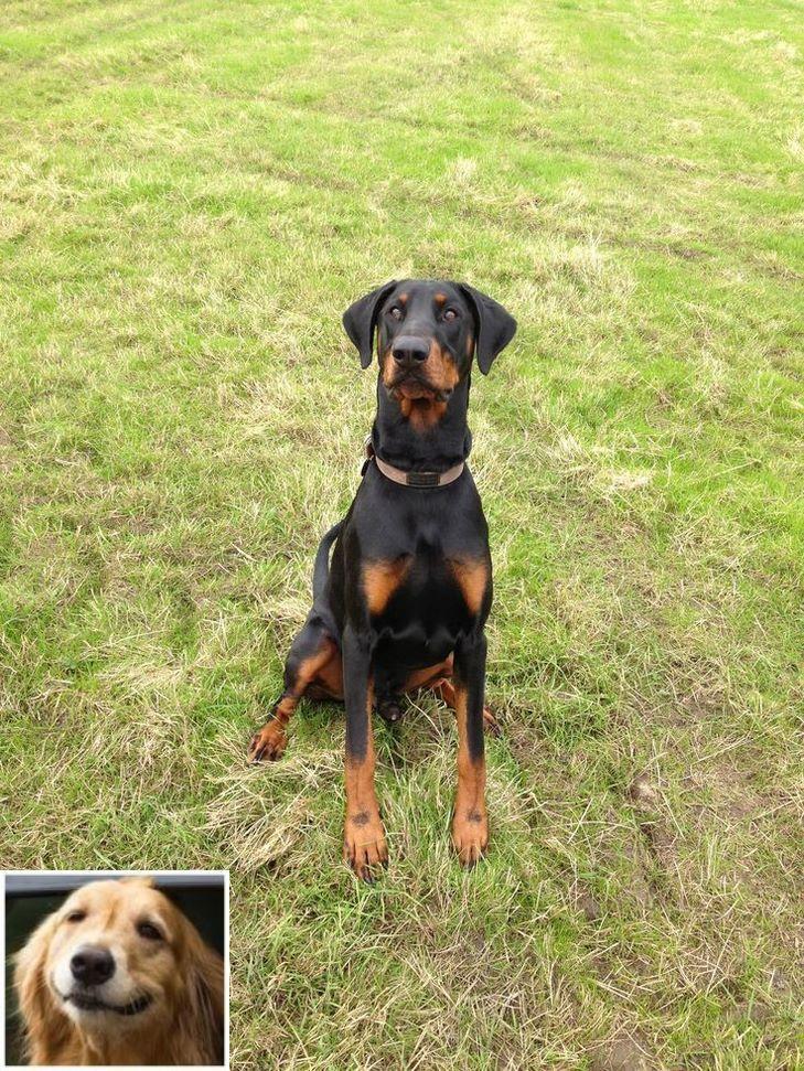 Dog Obedience Training Advice Dogtraininginmiami