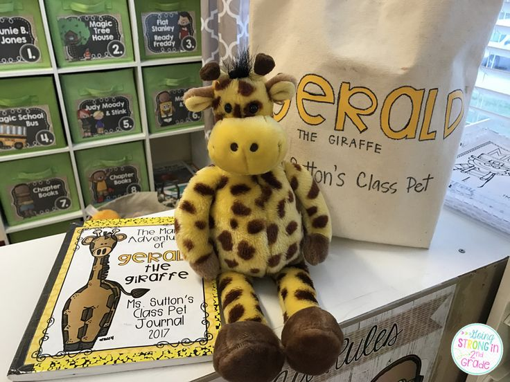 Meet Gerald - The Easiest Class Pet in Town!  Class Stuffed pet - so much easier than a live one!