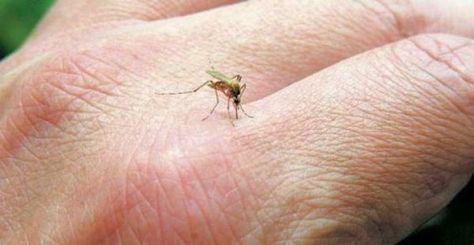 Τα κουνούπια είναι ο χειρότερος εφιάλτης μας τώρα το καλοκαίρι. Εκεί που καθόμαστε αρχίζουμε και ξύνουμε το χέρι μας ή το πόδι μας και το αποτέλεσμα είναι