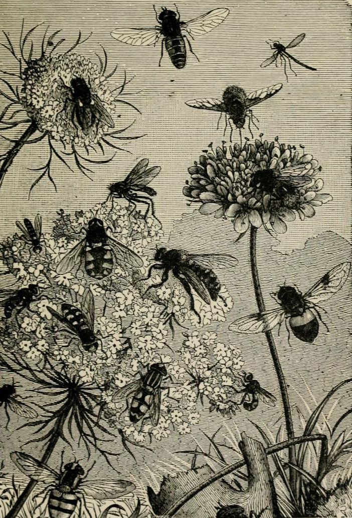 'About Bees' by Rev. F. G. Jenyns 1886: