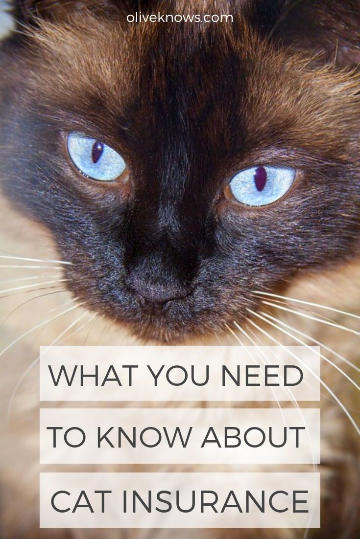What You Need To Know About Pet Insurance With Images Cat