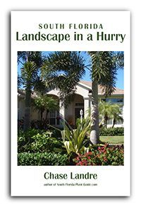 Everything you need to know about South Florida Landscape Plants - Flower, tree, shrub and palm tree photos with descriptions, gardening how-to, the perfect guide for newbies, natives and snowbirds.