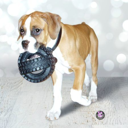 8 COMMON REASONS DOGS DIE This list is especially true for puppies!  1.       The kids are playing with Legos or some other little toys and one gets stuck in your dog's throat or even goes down into her digestive tract. Know your dog and keep ...