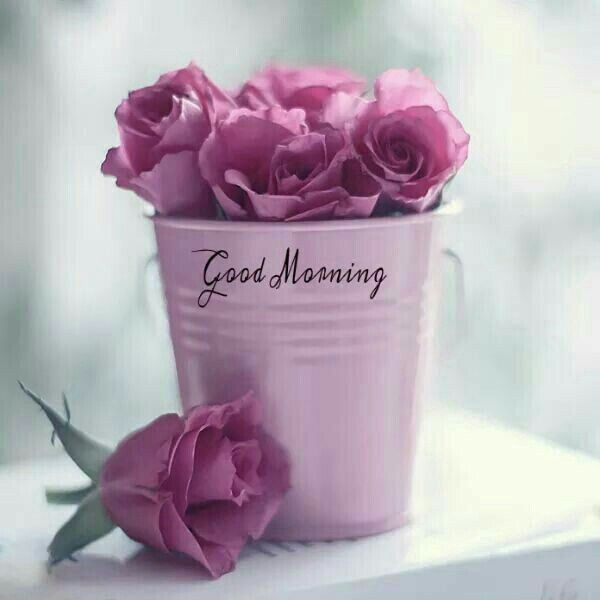 e2b6bd59b16f2326f5c36e75c63f4e35--good-morning-wishes-good-morning-sunshine.jpg