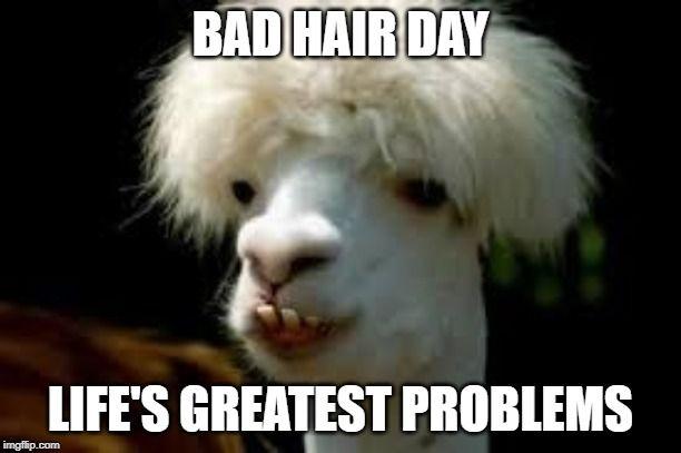 Bad Hair Day Llama Funny Animal Memes Humor Animal Memes
