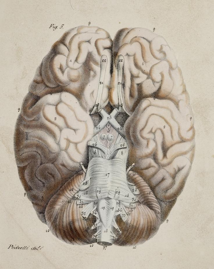 127 best Beautiful Brains images on Pinterest | The brain, Brain art ...