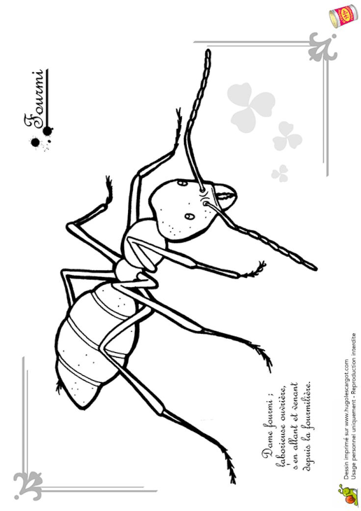 Coloriage petites betes fourmi | Coloriage insectes ...