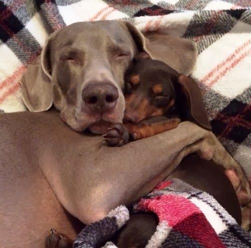 Best Friends - A big dog and a little dog.