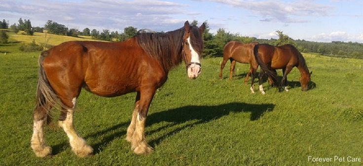 Horses-foreverpetcare http://www.foreverpetcare.com