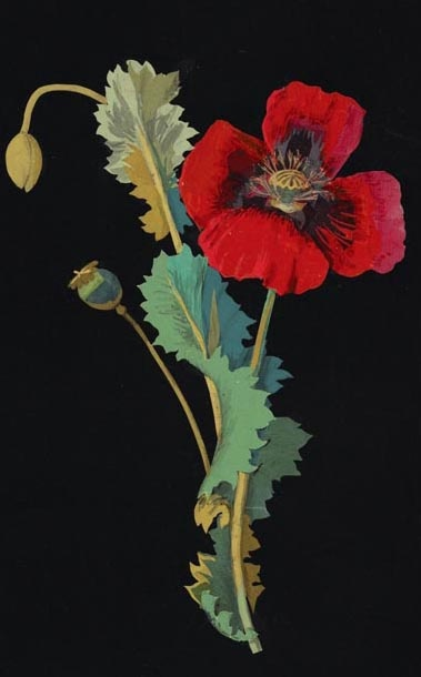 """Mary Delany (English, 1700-1788) - """"Papaver somniferum"""" (Opium Poppy), 1776 - Collage of coloured papers, with bodycolour and watercolour, on black ink background"""