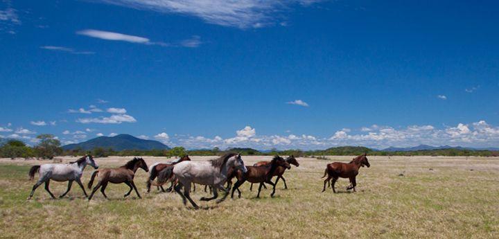 O cavalo lavradeiro de Roraima, também chamado de cavalo selvagem, é um dos principais símbolos do estado de Roraima e, por isso, normalmente são vistos estampados […]