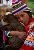 PERU Zuid-Amerika 2008 januari 2: het Peruaanse meisje sterke omvat een lam van de Lama. Plaats in de Andes. Op 2 januari 2008. stock photography
