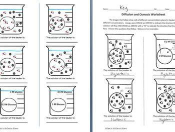 Osmosis and Diffusion Worksheet | Worksheets | Worksheets, Teaching ...