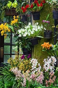 Belas orquideas