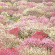 Hirosaki Castle (Hirosaki Park), Hirosaki, Aomori, Japan, 弘前城(弘前公園), 青森県弘前市
