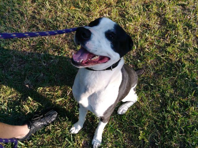Adopt Buddy Courtesy Post On Adoption Foster Animals Dog Friends