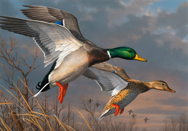 Third place in the 2015 Federal Duck Stamp Contest went to James Hautman of Chaska, Minn., for his acrylic painting of a pair of mallards.