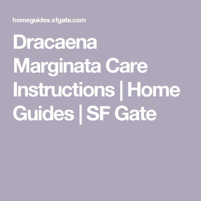 Indoor Care for a Dracaena Marginata  Home Guides  SF Gate