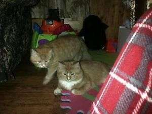 2 free 6 months cats