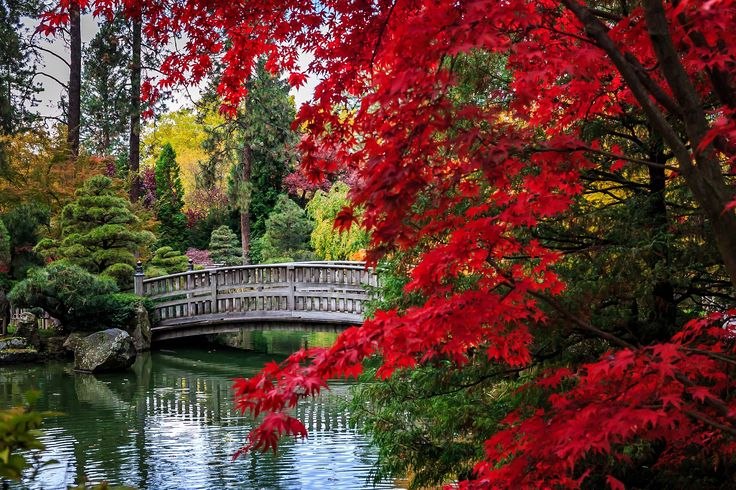 The bridge at the Japanese garden in Manito Park, Spokane by Keith D