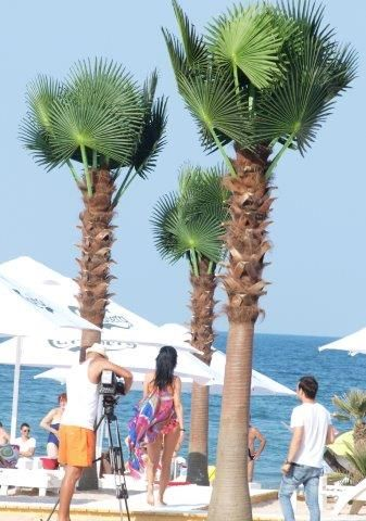 Modern artificial palm trees on a beach in Constanta, Romania