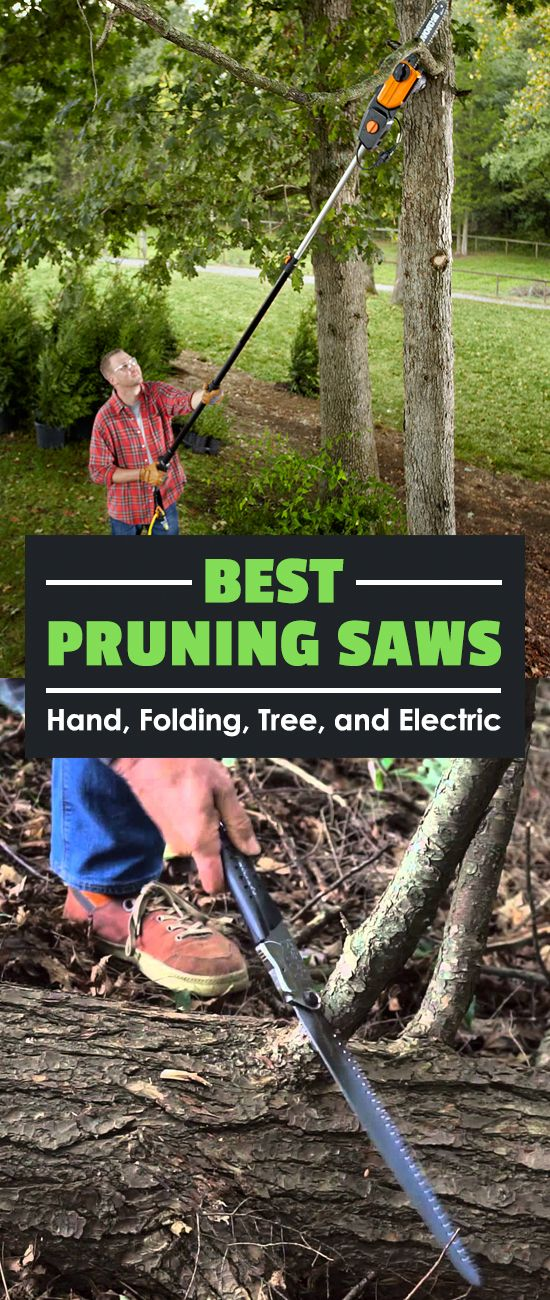 If there's one tool gardeners overlook, it's the humble pruning saw. See my picks for the best pruning saws as well as the type you should buy.